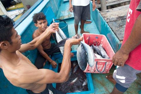 tuna-report-skipjack-two-small-9decb960db60698a257f2f02acf5b33bc93ae0b5e3ca8fe9cac2d2a5acbb4c1a